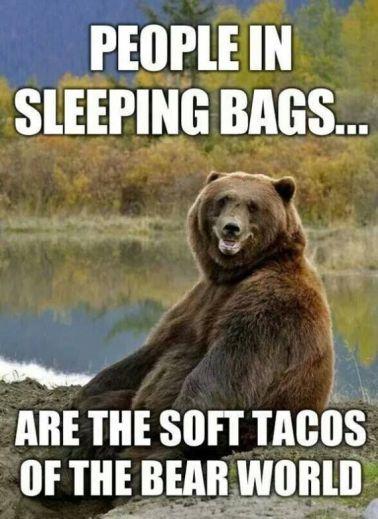 c035e409f06632ca89cd7163f18439c2--bear-meme-funny-bears